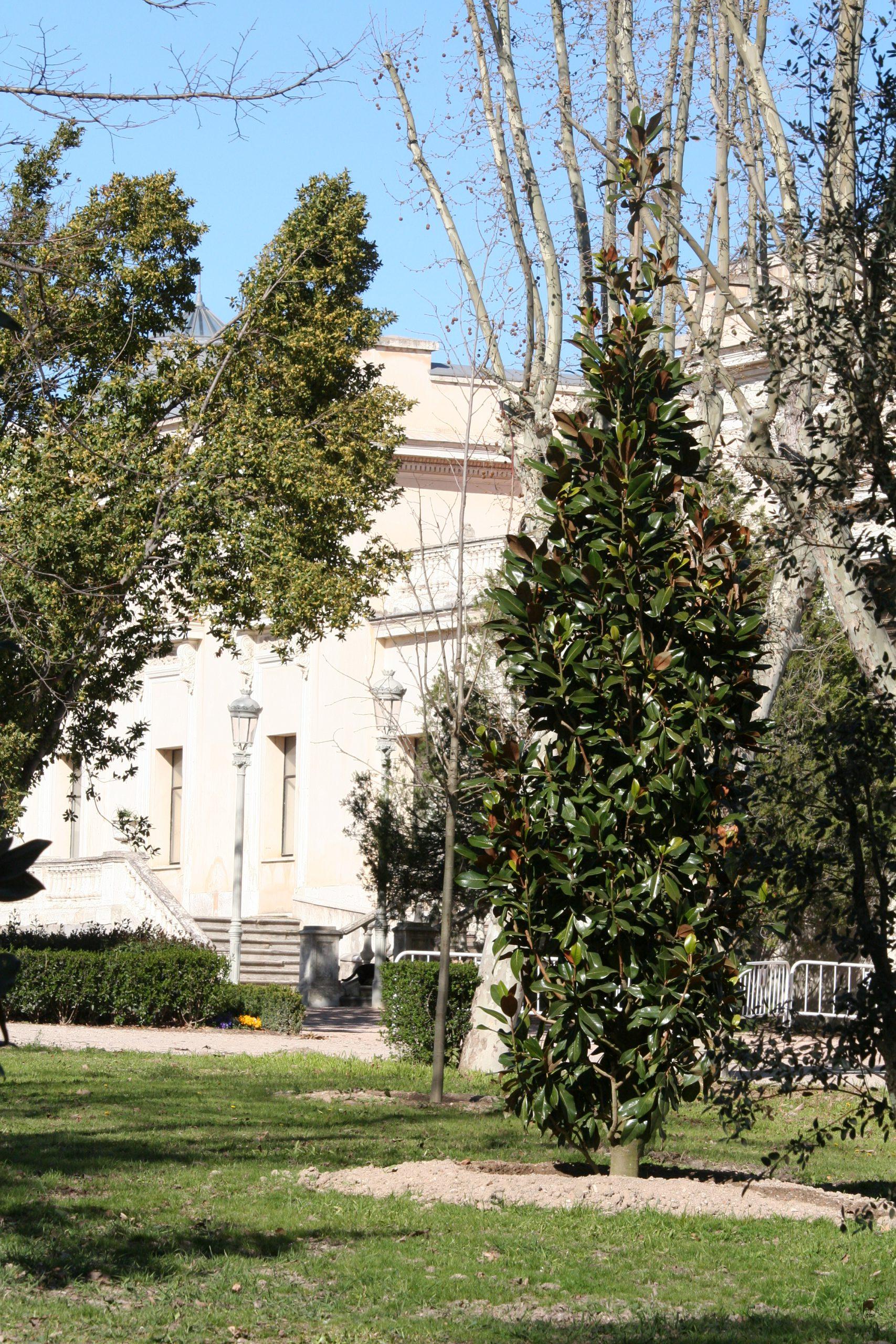 Palacio Nuevo desde la verja